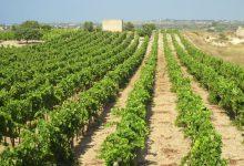 Pachino| 2 milioni per l'agricoltura, ne mancano 3