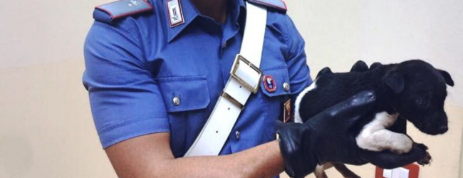 Carlentini | Cucciolo di meticcio salvato dai carabinieri