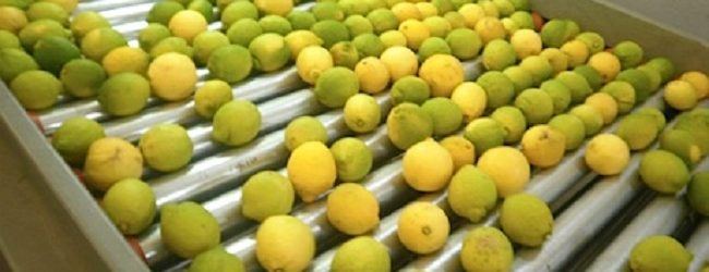 Noto| Controlli e sanzioni in un deposito di limoni