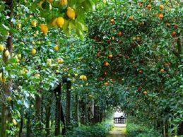 Noto| Abusivismo edilizio, denunciato titolare azienda limoni
