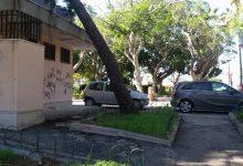 Augusta| Avviata la potatura degli alberi