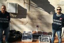"Augusta| Operazione ""Swordfish"": sequestrate grosse quantità di pesce e inflitte sanzioni amministrative"