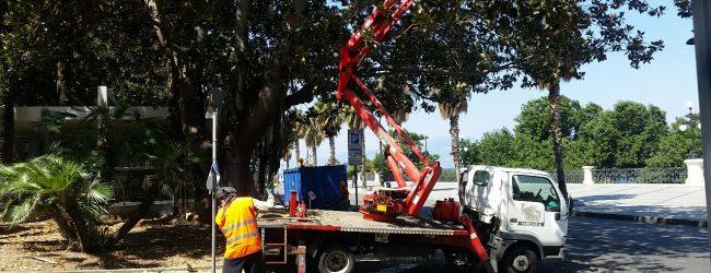 Augusta| Festa dell'albero. Potatura in città e messa a dimora di alberi nelle scuole