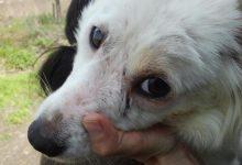 Noto| Maltrattano animali, due denunce