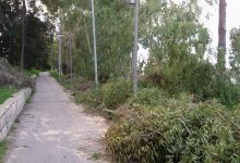 Augusta  Potati alcuni alberi dei giardini pubblici
