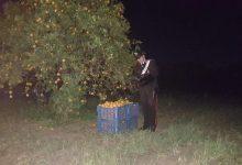 Melilli| Tentano furto di agrumi a Villasmundo