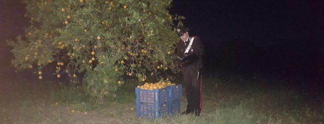 Melilli  Tentano furto di agrumi a Villasmundo