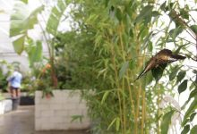 Siracusa| Da primavera la Casa delle Farfalle