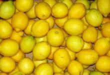 Siracusa| Rubano 200 Kg di limoni a Spinagallo