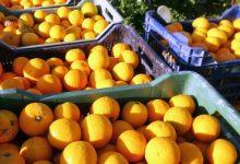 Lentini | Braccianti agricoli in difficoltà, ora c'è anche la concorrenza di manodopera sottopagata