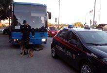 Siracusa| Antidroga, controlli su autobus scolastici