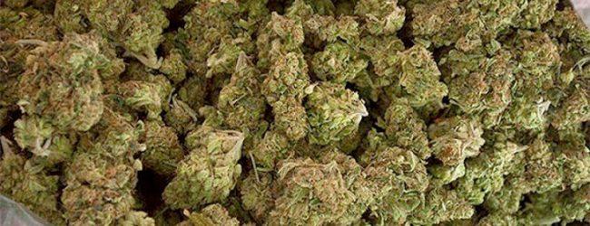 Lentini | In auto con 42 chili di marijuana, lentinese arrestato nelle campagne di Chiaramonte Gulfi