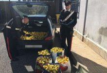 Siracusa| Recuperati 1800 Kg di agrumi rubati