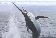 Siracusa| Via libera alla pesca del pescespada