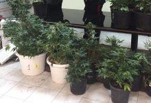 Siracusa| Coltivava marijuana in casa