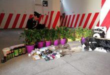 Avola  Arrestato con otto piante di cannabis