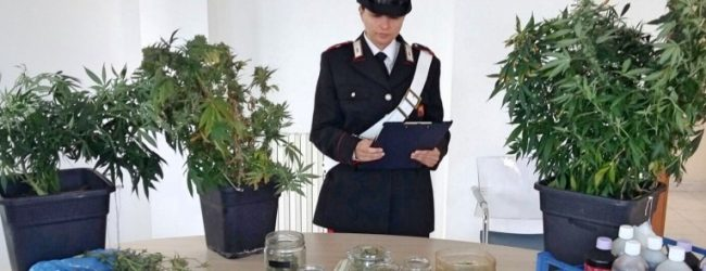Carlentini   Una coltivazione di marijuana in casa, incensurato di 35 anni in manette