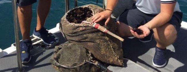Augusta| Sequestrati dalla Guardia costiera 1.200 ricci di mare