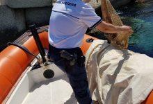 Augusta| Sequestro ricci di mare, frutto di pesca di frodo