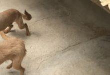 Noto| Denunciato per maltrattamento di animali