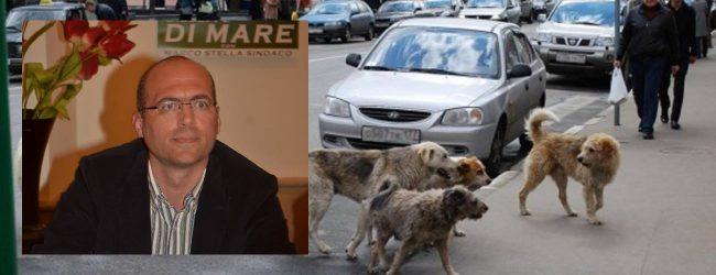 Augusta|Bimbo aggredito da un cane. Di Mare bacchetta il Comune, replica Pulvirenti