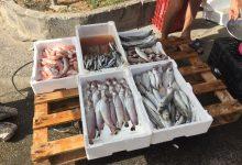 Augusta| Guardia costiera: operazione di polizia della filiera della pesca, sequestri