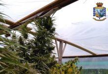 Siracusa| Sequestro piantagione di marjuana a Spinagallo