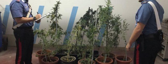 Siracusa| Piante di marijuana in casa, arrestato