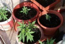 Lentini | Coltivava marijuana sul balcone di casa, denunciato diciottenne