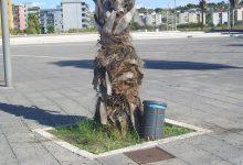Augusta| Denunciati altri 3 giovani autori dell'atto vandalico in piazza Unità d'Italia.