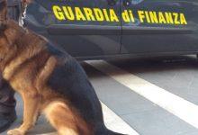 Siracusa| Finanzieri con cani antidroga scovano pusher
