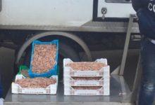 Siracusa| GdF. Sequestrato pesce trasportato senza autorizzazione sanitaria