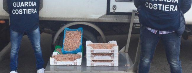 Siracusa  GdF. Sequestrato pesce trasportato senza autorizzazione sanitaria