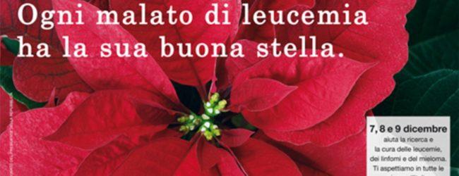 Siracusa| Tornano le Stelle di Natale AIL in tutte le piazze
