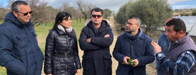 "Palermo| Il virus ""New Delhi"" colpisce i terreni siracusani"