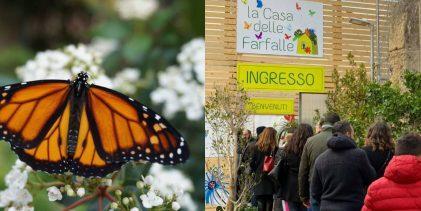 Palermo| Tutti pazzi per le farfalle.