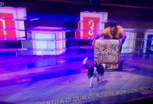 Augusta| Andrea D'Amico e Spank ieri su Rai Uno ai Soliti Ignoti-il ritorno.