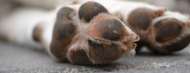 Carlentini | Lega e trascina un cane con lo scooter, pensionato denunciato per maltrattamento di animali