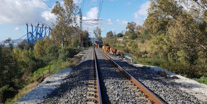 Siracusa  La Polfer di Siracusa denuncia 3 allevatori per pericolo di disastro ferroviario