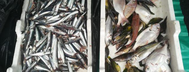 Augusta  Controlli filiera pesca: la Guardia costiera sequestra e sanziona.