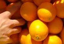 Lentini | Rubano arance, sorpresi dalla polizia con l'auto stracarica e denunciati