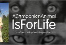 Sortino| Lotta all'abbandono degli animali d'affezione ed al randagismo