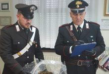 Floridia| Pregiudicato disoccupato deteneva in casa 2 Kg di Marijuana e 7 di Cocaina: Arrestato dai Carabinieri