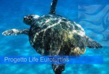 Noto| Tartarughe marine: Comune e WWF assieme per proteggerle