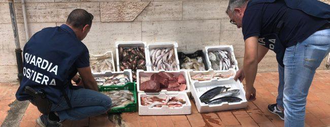 """Augusta  Capitaneria: """"By Catch"""" operazione di controllo filiera della pesca."""