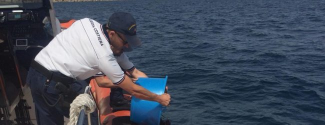 Augusta| La Guardia costiera sequestra 200 ricci di mare.