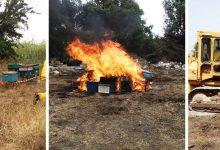 Lentini | Distrutti gli alveari infestati dal coleottero Aethina Tumida