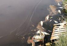 Augusta| Moria di pesci: verifiche dell'Asp. Per Parisi è urgente attuare il piano.