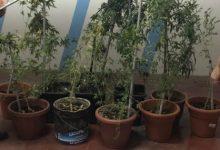 Floridia| Arrestato odontoiatra con 6 piante di marijuana e un bilancino di precisione