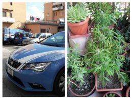Siracusa| Operazione antidroga: La polizia sequestra 500 grammi di hashish